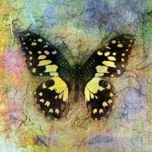 Butterfly Elena Ray